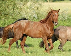 commander vermifuge chevaux ligne