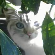 Le meilleur: ecole du chat lille