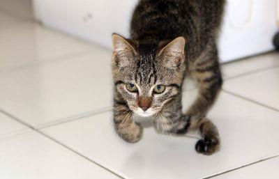 Chat sans toit 22