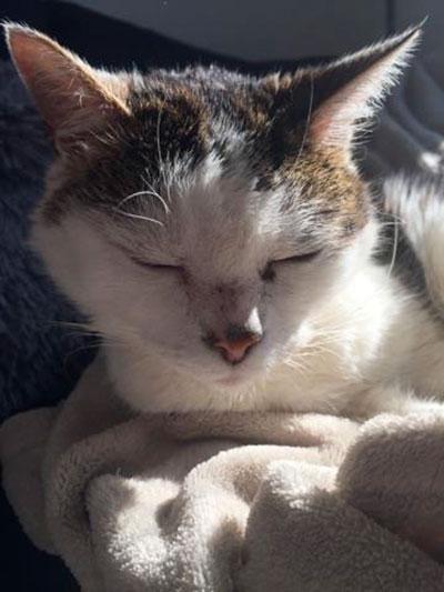 sidou, association chiens et chats en détresse, Clic Animaux