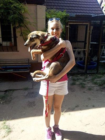 Arrivée des 18 chiens et des 2 chats de Roumanie par l'association 4NewLife, Clic Animaux