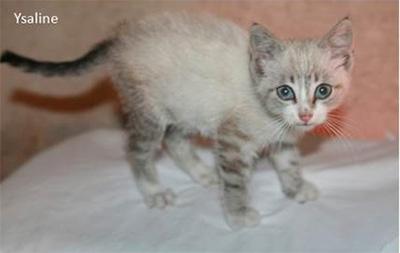 coryza chaton 1 mois