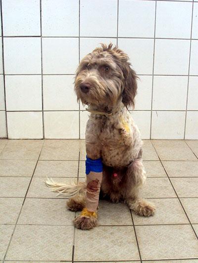 Calypso, Comité de Soutien à la Cause Animale,  Clic Animaux