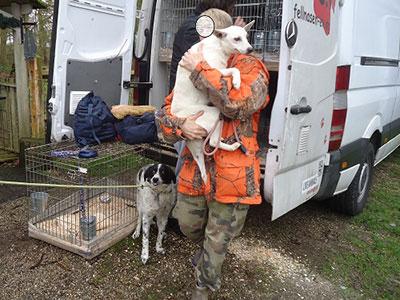 sauvetage chiens Bulgarie