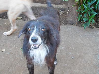 Diego, association l'homme et son chien, la bande à basile