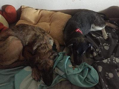 Deux chiens Les Audrey & Co Clic Animaux