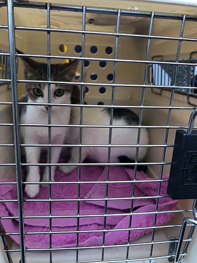 Les chattes Gaya et Altea 4 New Life Clic Animaux