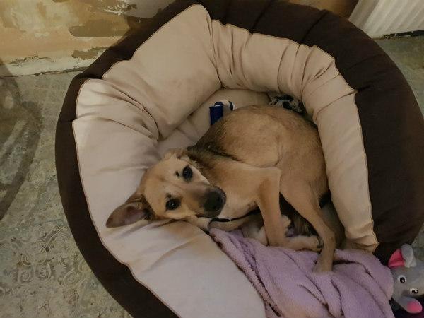 Un chien Alerte SOS Clic Animaux