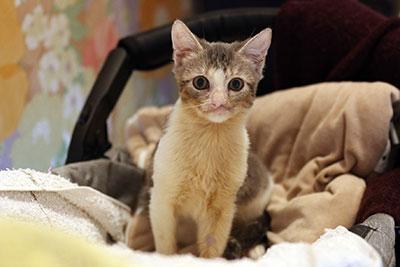 Neo, association Pas de chat sans toit, Clic Animaux