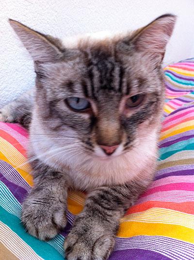 Juliette, association Animal Aide Action, Clic Animaux