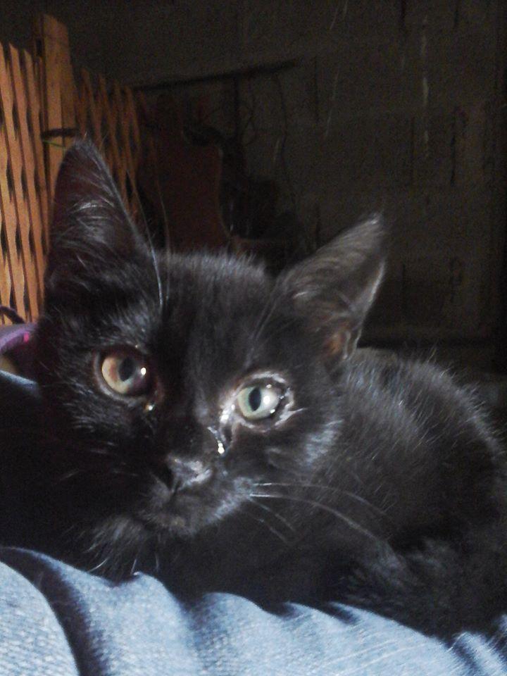 Merci pour les 86 chats clicanimaux for Quelle heure ikea ouvre t il aujourd hui