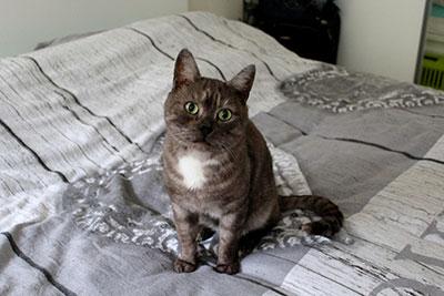 levon, chat de l'association l'Etoile Féline, Clic Animaux