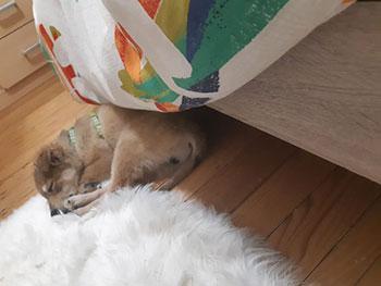 Minion est sauvé !