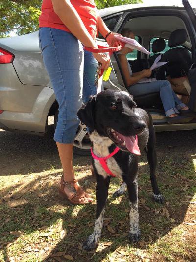 arrivée des 22 chiens de Guadeloupe,  Association COPA Guadeloupe, Clic Animaux
