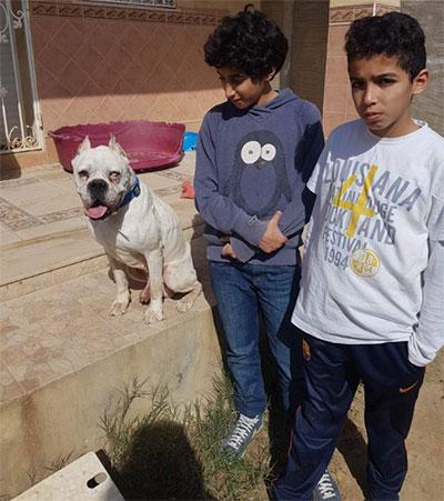 héros, sauvé par l'association sos chiens sans frontière, Clic Animaux