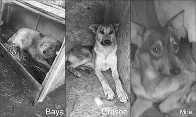 Baya, Crusoé et Mira Mukitza Clic Animaux