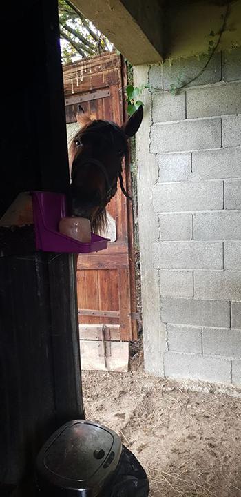 chevaux sauvés