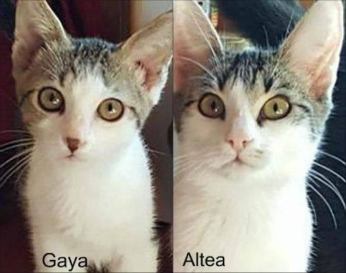 Gaya et Altea 4NewLife Clic Animaux