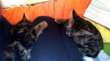 9 chats sont sauvés !