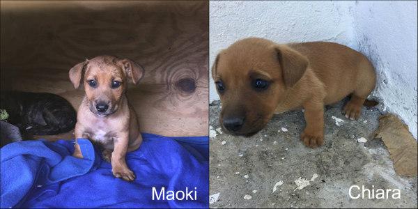 Maoki et Chiara Copa Guadeloupe Clic Animaux