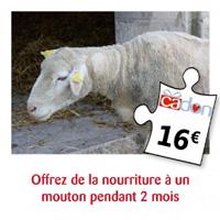 offrez un an de nourriture à un mouton pendant 2 mois