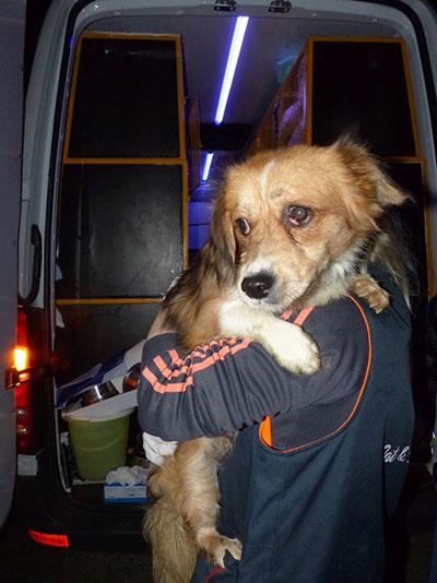 Un chien Mukitza clic Animaux