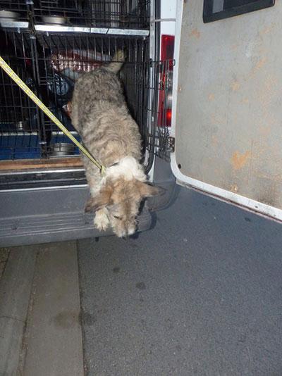 Arrivée des chiens Mukitza Clic Animaux