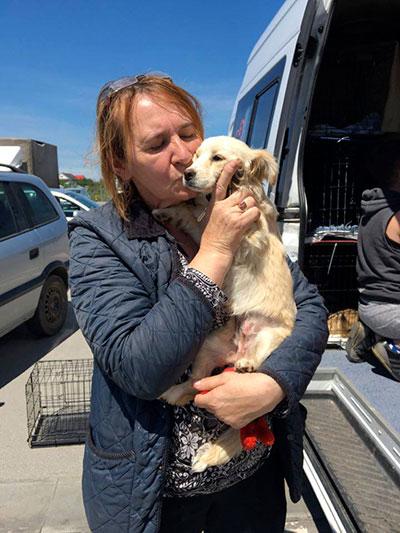 Arrivée des 41 chiens et des 2 chats de Roumanie, Association Remember Me