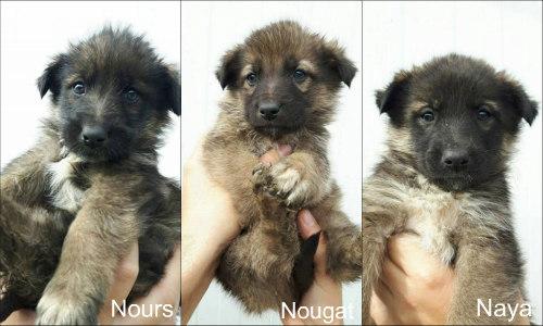 Nours, Nougat et Naya 4NewLife Clic Animaux