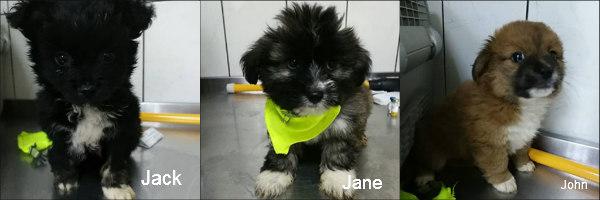 Jack, Jane et John Remember Me Clic Animaux