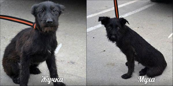 Zhouchka et Mouchka Alerte SOS Clic Animaux