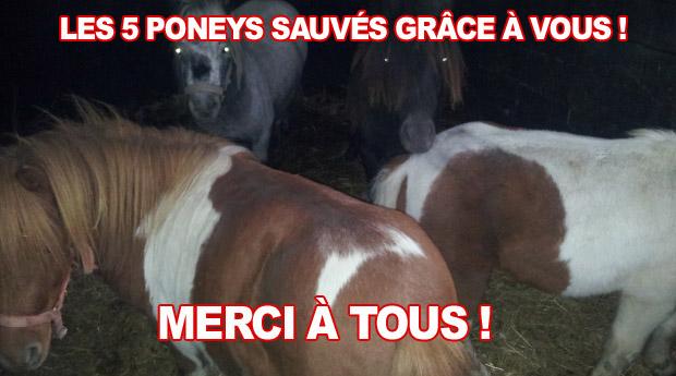 Des Bonnes Nouvelles Des Poneys Clicanimaux
