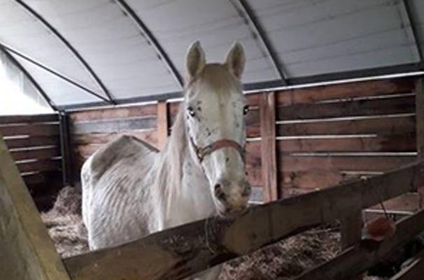 22 chevaux