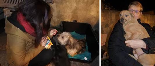 Les 7 chiens et le chat de Roumanie