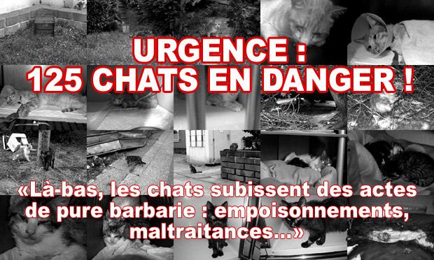 urgence 125 chats en danger sauvons les. Black Bedroom Furniture Sets. Home Design Ideas
