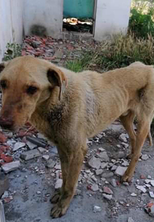 SOS_EUTHANASIE_40CHIENS_WOF